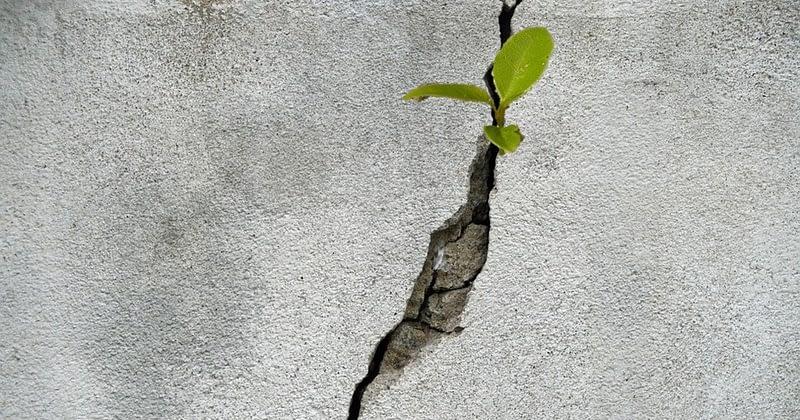 La vie qui pousse derrière le mur…